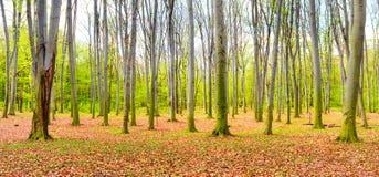 Panorama de forêt d'automne Photographie stock libre de droits