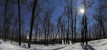 Panorama de forêt la nuit clair de lune d'hiver images stock