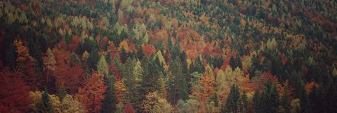 Panorama de forêt mélangée alpine Images stock
