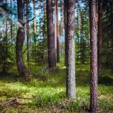 Panorama de Forest Ecology imagem de stock