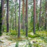 Panorama de Forest Ecology fotos de stock