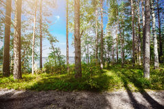 Panorama de Forest Ecology fotos de stock royalty free