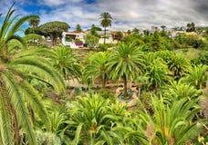 Panorama de HDR de Parque del Drago en Icod de los Vinos - Tenerife Fotografía de archivo libre de regalías
