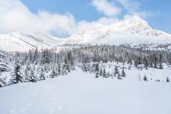 Panorama de la cordillera del invierno Foto de archivo libre de regalías