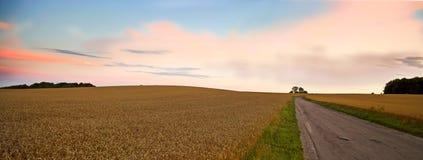 Panorama de la cosecha en la puesta del sol foto de archivo