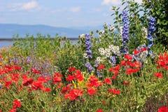 Panorama de la flor Fotos de archivo libres de regalías