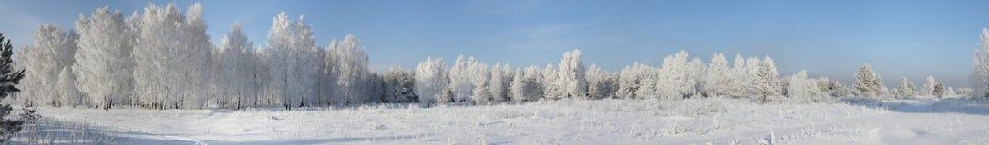 Panorama de la madera del invierno Foto de archivo libre de regalías