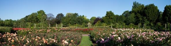 Panorama de la rosaleda del parque del regente fotos de archivo