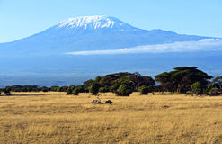 Panorama de la sabana africana foto de archivo libre de regalías