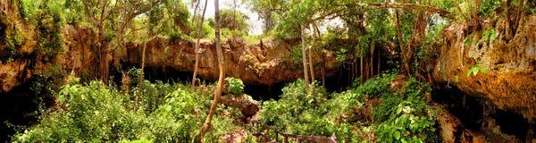 Panorama de la selva imagenes de archivo
