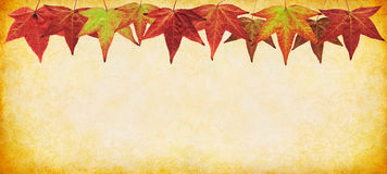 Panorama de lame d'automne Image stock
