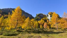 Panorama de LMountain, com larício amarelo e o céu azul em outubro imagem de stock