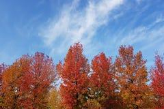 Panorama de los árboles coloreados multi del otoño con el cielo azul en el fondo Fotografía de archivo