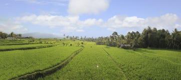 Panorama de los campos del arroz fotografía de archivo