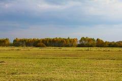 Panorama de los campos del otoño, en el fondo un soto del abedul Fotografía de archivo