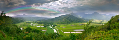 Panorama de los campos del taro en Kauai Hawaii Imagen de archivo libre de regalías