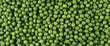 Panorama de los guisantes verdes Imagenes de archivo