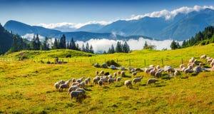 Panorama de los pastos alpinos en el esloveno Foto de archivo