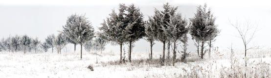 Panorama de los árboles nevosos del invierno Foto de archivo libre de regalías