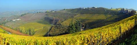 Panorama de los viñedos del otoño Fotos de archivo