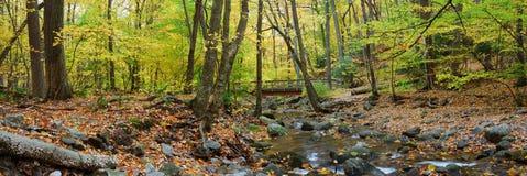 Panorama de madeira da ponte da floresta do outono sobre a angra Fotografia de Stock
