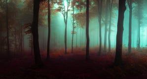 Panorama de madeiras de vista assustadores do conto de fadas nevoento da floresta no A M. fotografia de stock royalty free