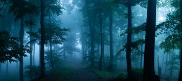 Panorama de madeiras de vista assustadores do conto de fadas nevoento da floresta no A M. fotos de stock royalty free