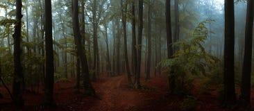 Panorama de madeiras de vista assustadores do conto de fadas nevoento da floresta no A M. imagens de stock royalty free