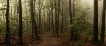 Panorama de madeiras de vista assustadores do conto de fadas nevoento da floresta no A M. fotografia de stock