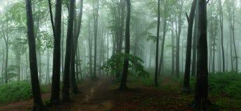 Panorama de madeiras de vista assustadores do conto de fadas nevoento da floresta no A M. imagem de stock royalty free