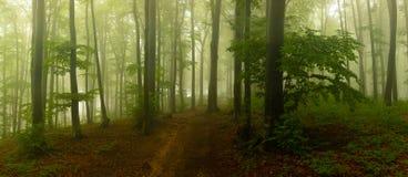 Panorama de madeiras de vista assustadores do conto de fadas nevoento da floresta no A M. foto de stock royalty free