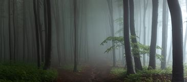 Panorama de madeiras de vista assustadores do conto de fadas nevoento da floresta no A M. foto de stock