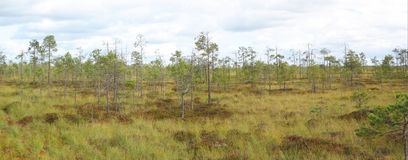 Panorama de marais Photos stock