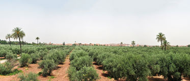 Panorama de Marrakesh Fotos de archivo libres de regalías