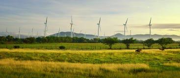 Panorama de moinhos de vento modernos contra montanhas e vacas da pastagem Imagens de Stock Royalty Free
