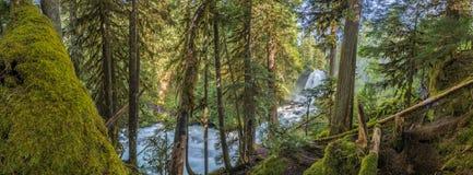 Panorama de Moss Forest Below Sahalie Falls images stock
