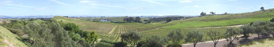 Panorama de Napa Valley Fotografia de Stock Royalty Free