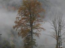 Panorama de niebla Fotografía de archivo