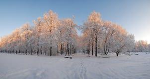 Panorama de parc dans la saison d'hiver Image libre de droits