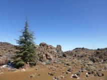 Panorama de paysage de montagne d'arbre de sapin Photo libre de droits