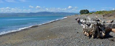 Panorama de plage de réserve d'oiseaux d'île de Kapiti, Nouvelle-Zélande Photographie stock libre de droits