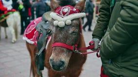 Panorama de poney brun sur la fée de Noël banque de vidéos