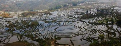 Panorama de terraços do arroz em Yuanyang, província de Yunnan imagem de stock