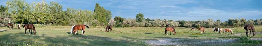 Panorama de um prado Fotografia de Stock