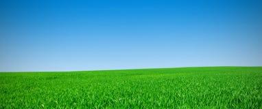 Panorama de um prado Imagens de Stock Royalty Free