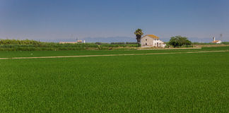 Panorama de uma casa branca nos campos do arroz do La Albufera fotos de stock royalty free