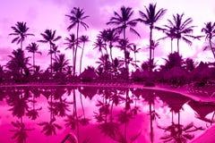 Panorama de uma Palm Beach sob o céu do por do sol foto de stock royalty free