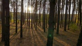 Panorama de un bosque en otoño puesta del sol de la cantidad almacen de video