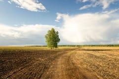 panorama de un campo rural en verano con el abedul, Rusia Foto de archivo
