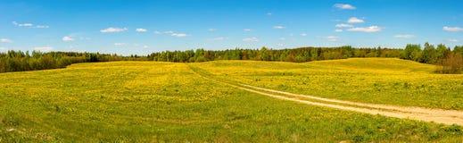 Panorama de un campo de wildflowers amarillos Fotografía de archivo